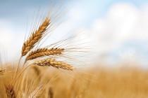 Regione Abruzzo: incentivi per promuovere la qualità dei prodotti agricoli